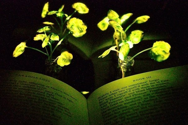 glowing-plant