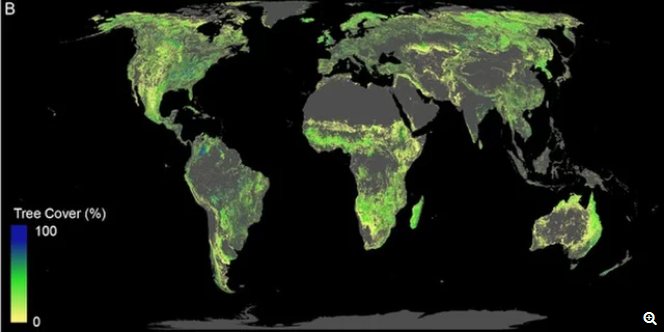 Fight Climate Change Plant 1 Trillion Trees